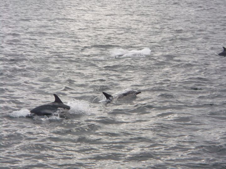 Dolphins from the Shearwater Cruise