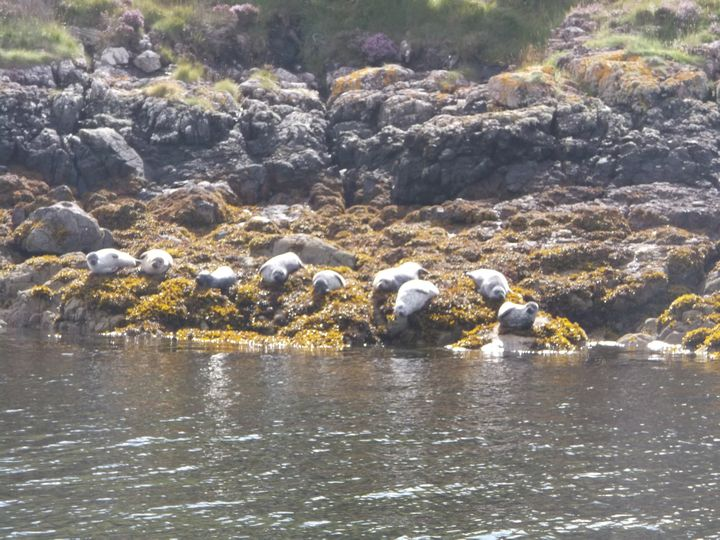 Seals from the Shearwater Cruise